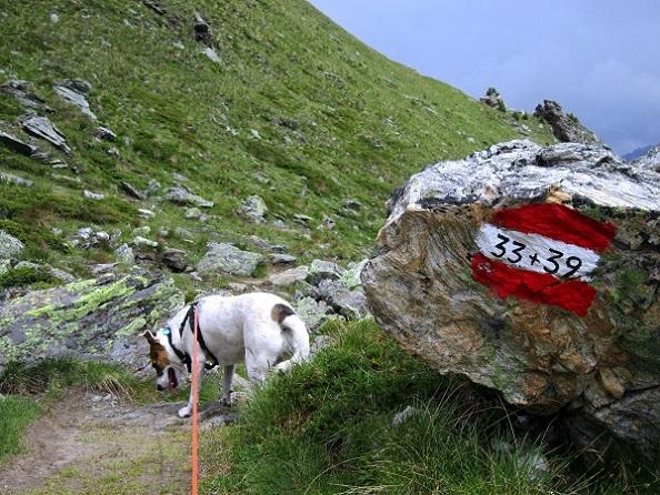 Foto 3 zur Tour: Wander-Dreitausender Kalvenwand (3061m)