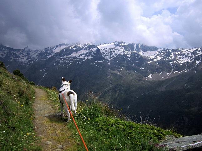 Foto 1 zur Tour: Wander-Dreitausender Kalvenwand (3061m)