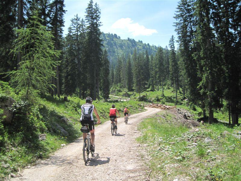 Foto: Heidi Schützinger / Mountainbiketour / Von Gosau-Hinterthal auf die Roßalm / nach einer Stärkung bei der Roßalm fahren wir zum Gosausee ab / 05.07.2015 16:55:33