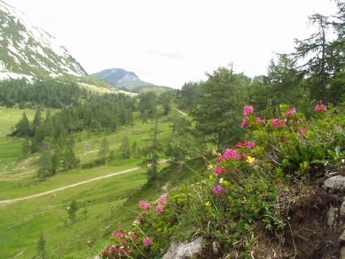 Foto: hofchri / Mountainbike Tour / Tauplitzalm - Downhillstrecke / berauschendes Erlebnis / 06.07.2009 19:26:31