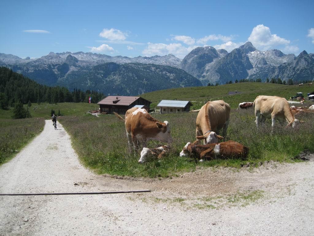 Foto: Heidi Schützinger / Mountainbike Tour / Echo / Das Ziel : Die Gotzenalm ist erreicht. / 10.07.2011 17:54:34