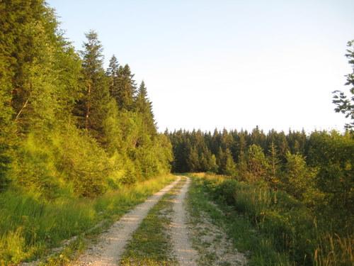 Foto: http / Mountainbike Tour / Schlenken Route / Der Schotterweg von Gaissau bis zur Formau ist in gutem Zustand und auch mit dem Trekkingbike zu befahren. / 22.07.2010 19:50:51