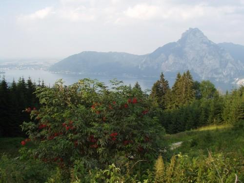Foto: hofchri / Mountainbiketour / Von Neukirchen zu den Langbathseen / Traunstein und Traunsee / 06.07.2009 19:35:29