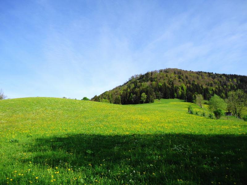 Foto: Günter Siegl / Wandertour / Vorderfager  - Rauchenbichlalm - Gaisberg / 15.05.2015 15:03:45