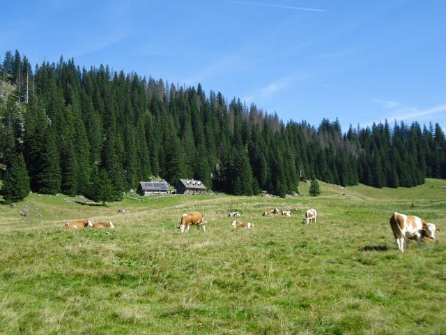 Foto: Günter Siegl / Wander Tour / Über die Feichtau auf den Hohen Nock / Pölzhütte (bewirtschaftet) / 17.09.2012 21:06:25