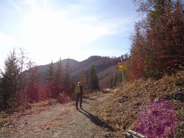 Foto: Günter Siegl / Wander Tour / Von der Viehtaleralm auf die Bodenwies / Bodenwies / 20.11.2011 21:45:40