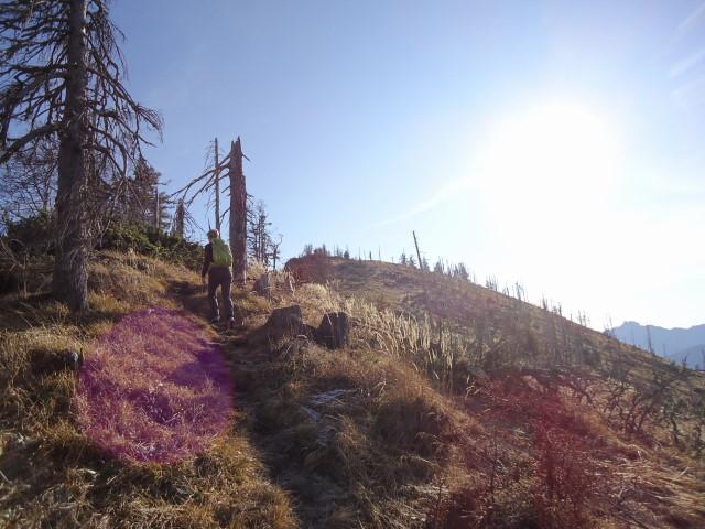 Foto: Günter Siegl / Wander Tour / Von der Viehtaleralm auf die Bodenwies / Gipfelaufbau / 20.11.2011 21:44:02