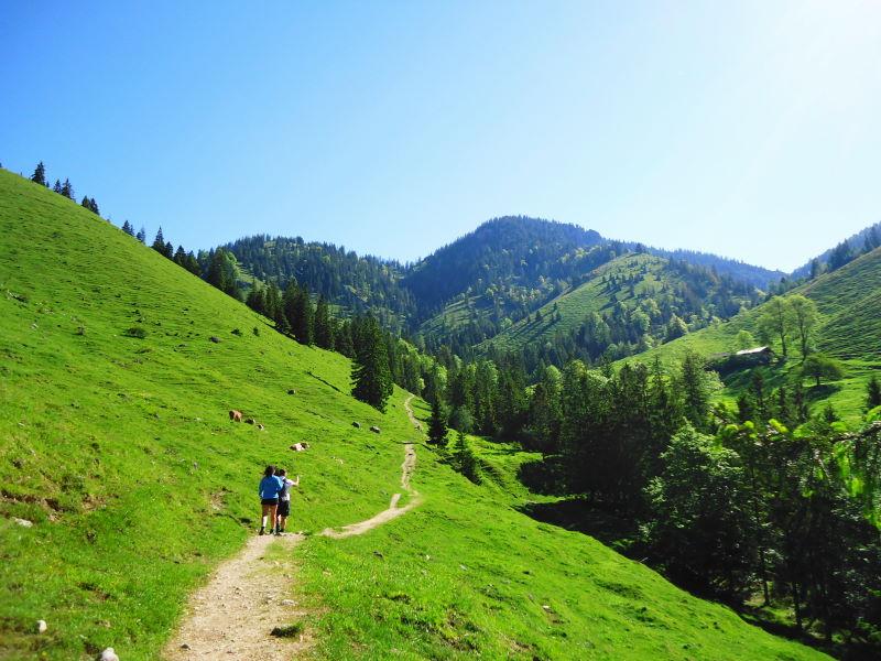 Foto: Günter Siegl / Wander Tour / Vom Ursprungpaß zum Trainsjoch / Almgelände / 05.06.2017 22:42:59