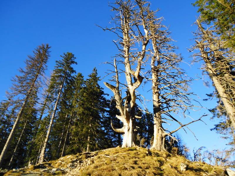 Foto: Günter Siegl / Wander Tour / Von der Postalm auf das Wiesler Horn, 1603m / 28.12.2015 19:57:36