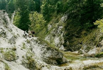 Foto: Wolfgang Dröthandl / Wander Tour / Ötschergräben - Grand Canyon Niederösterreichs / Auf dem Weg zum Wh. Vorderötscher, vor der Abzweigung aus den Gräben; 9. 5.2002 / 16.05.2011 16:37:05