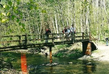 Foto: Wolfgang Dröthandl / Wander Tour / Durch die Raabklamm ´die längste Schlucht Österreichs´ / Erste Brücke von Arzberg aus, Schreisteg / 16.05.2011 16:06:14