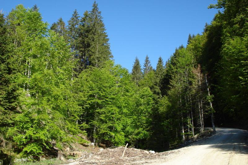Foto: Günter Siegl / Wander Tour / Von der Steyrling auf die Kremsmauer / Kaltauer Graben / 08.05.2011 21:30:37