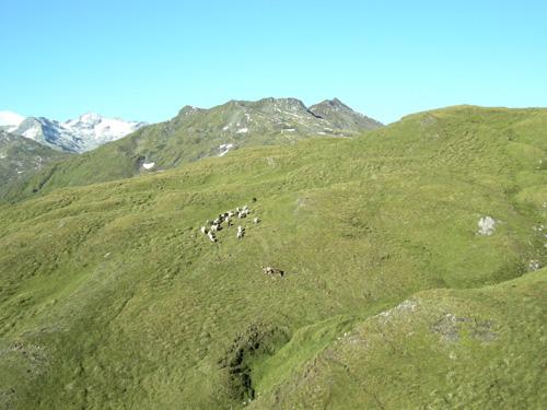 Foto: Redaktion Salzburg / Wander Tour / Von der Sticklerhütte auf das Weißeck / Blick ins Reinkar hinunter, an die 1.000 Schafe verbringen hier die Sommerfrische.  / 15.07.2009 10:29:13