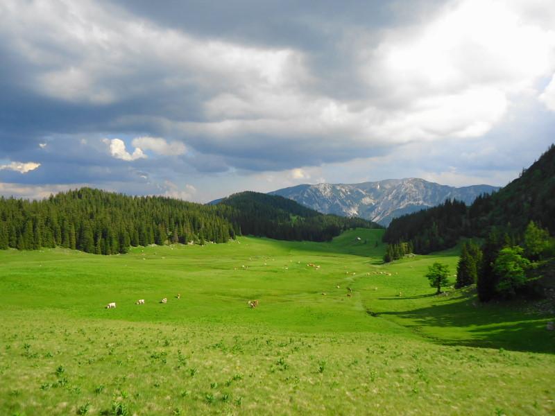 Foto: Günter Siegl / Wander Tour / Vom Niederalpl auf den (die) Tonion / Herrenboden / 13.06.2014 15:11:47
