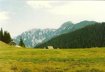 Foto: Wolfgang Dröthandl / Wander Tour / Vom Niederalpl auf den (die) Tonion / Wetterinalm ober dem Niederalpl mit Wildkamm (Hohe Veitsch) / 31.01.2011 12:39:12