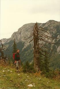 Foto: Wolfgang Dröthandl / Wander Tour / Vom Niederalpl auf den (die) Tonion / Tonion - Gipfelaufbau von der Weißalm / 31.01.2011 12:36:00