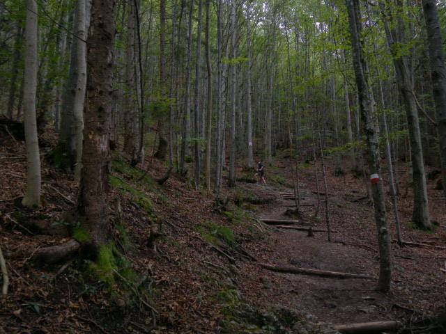 Foto: Wolfgang Lauschensky / Wander Tour / Vom Kesselberg auf den Jochberg / gut ausgebauter Bergwaldpfad / 18.09.2012 23:42:09