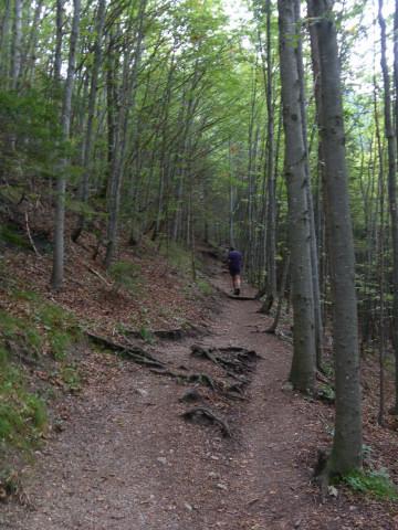 Foto: Wolfgang Lauschensky / Wander Tour / Vom Kesselberg auf den Jochberg / lichter Wald / 18.09.2012 23:40:26