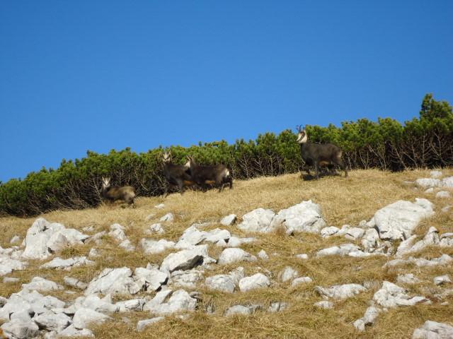 Foto: Günter Siegl / Wandertour / Überschreitung des Sengsengebirges von Windischgarsten nach Klaus / 22.11.2011 17:13:08