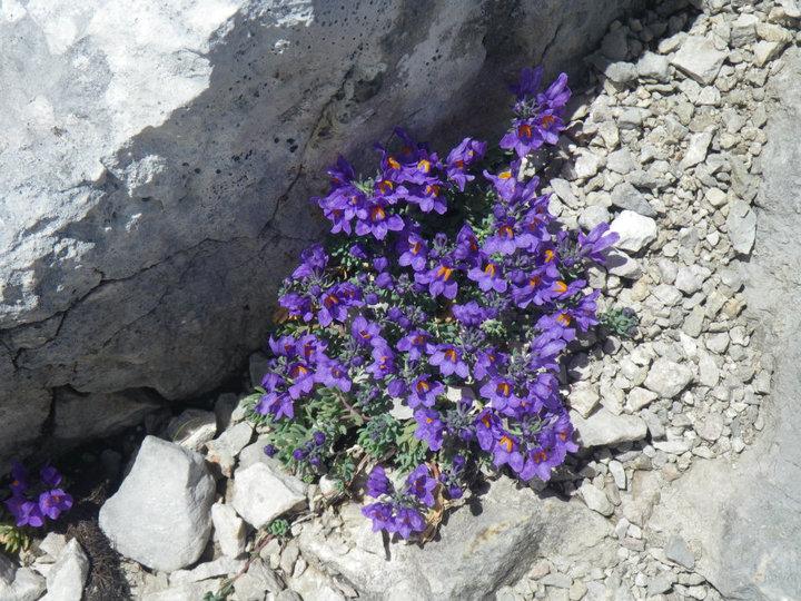 Foto: drjones31 / Wandertour / Auf den Spuren der Eiszeit - Etappe 1: Hunerkogel - Gjaidstein - Gjaidalm - Krippenstein / auf 2700m / 18.08.2010 16:07:54