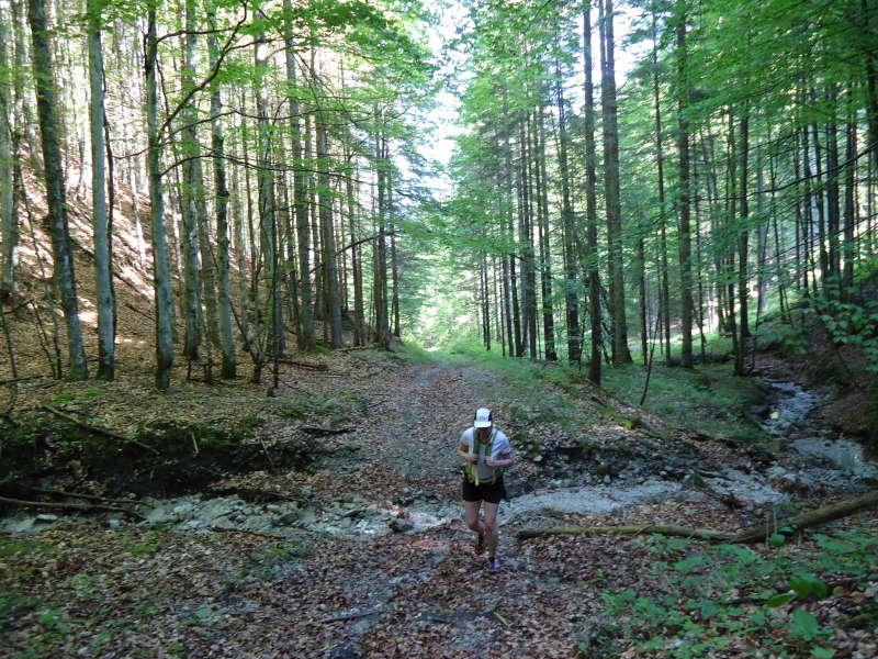 Foto: Günter Siegl / Wander Tour / Zellerhüte - Rundwanderung / Rehgraben / 10.06.2014 17:01:20