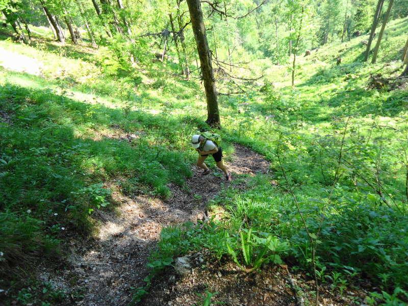 Foto: Günter Siegl / Wander Tour / Zellerhüte - Rundwanderung / 10.06.2014 17:01:09