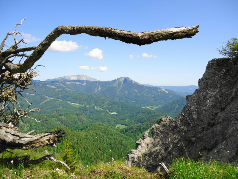 Foto: Günter Siegl / Wander Tour / Zellerhüte - Rundwanderung / 10.06.2014 17:00:19