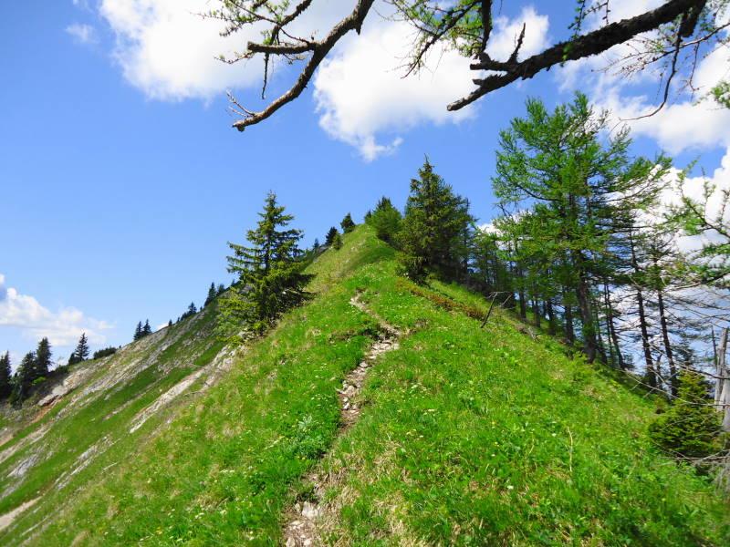 Foto: Günter Siegl / Wandertour / Zellerhüte - Rundwanderung / Gratanstieg Mittlerer Zeller Hut / 10.06.2014 16:57:20