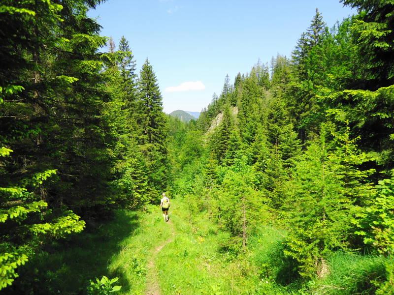 Foto: Günter Siegl / Wander Tour / Zellerhüte - Rundwanderung / Seewirtgraben / 10.06.2014 16:55:54