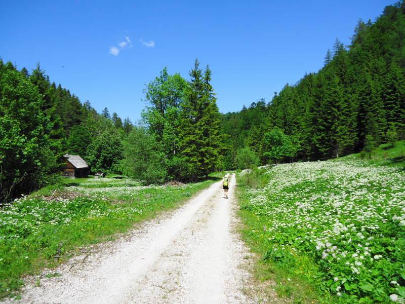 Foto: Günter Siegl / Wander Tour / Zellerhüte - Rundwanderung / 10.06.2014 16:55:10