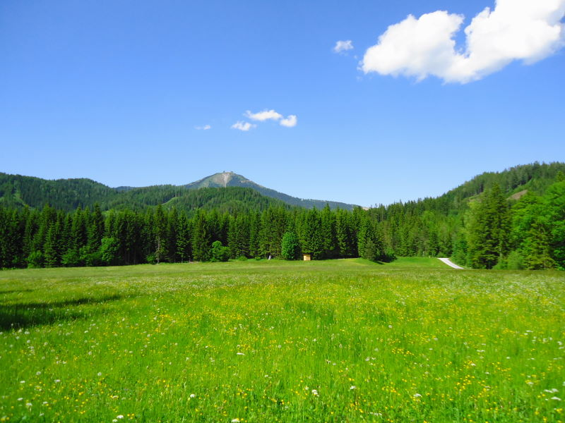 Foto: Günter Siegl / Wander Tour / Zellerhüte - Rundwanderung / Abstieg im Angesicht der Gemeindealpe / 10.06.2014 16:55:04