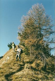 Foto: Wolfgang Dröthandl / Wander Tour / Zellerhüte - Rundwanderung / Aufstieg von der Jagdhütte im Zeller Sattel über den Kamm auf den Mittleren Zellerhut; alle Fotos vom 29. 10. 2000 / 06.04.2011 16:40:08