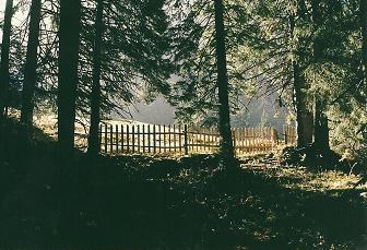 Foto: Wolfgang Dröthandl / Wandertour / Von Radmer auf das Zeiritzkampel / Ausstieg aus dem Wald zur Kammerl - Alm / 08.04.2011 10:47:01