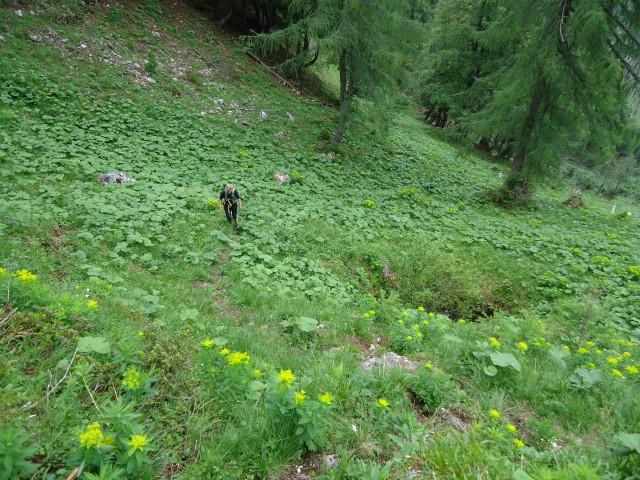 Foto: Günter Siegl / Wander Tour / Großes Maiereck - Rundwanderung / 01.07.2012 12:56:49