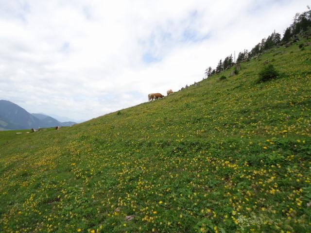 Foto: Günter Siegl / Wander Tour / Großes Maiereck - Rundwanderung / 01.07.2012 12:46:31