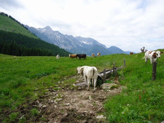Foto: Günter Siegl / Wander Tour / Großes Maiereck - Rundwanderung / 01.07.2012 12:46:20
