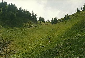 Foto: Wolfgang Dröthandl / Wander Tour / Großes Maiereck - Rundwanderung / Aufstieg zum Kl. Maiereck durch eine Wiesenmulde / 06.04.2011 16:21:36