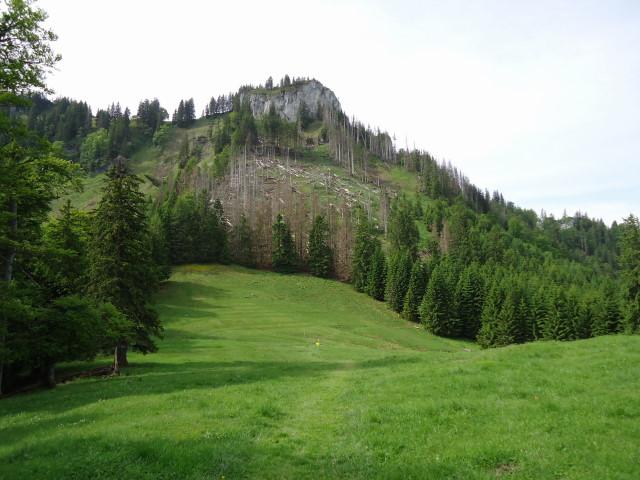 Foto: Günter Siegl / Wander Tour / Über die Ebenforstalm auf Alpstein und Trämpl / Trämpl / 03.06.2012 20:28:56