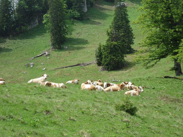 Foto: Günter Siegl / Wander Tour / Über die Ebenforstalm auf Alpstein und Trämpl / 03.06.2012 20:20:45