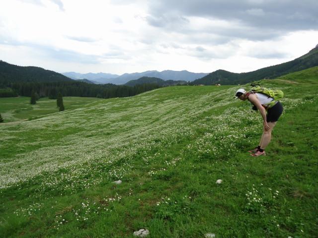 Foto: Günter Siegl / Wander Tour / Über die Ebenforstalm auf Alpstein und Trämpl / 03.06.2012 20:18:57