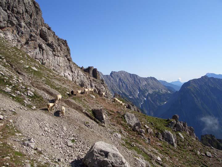 Foto: vince 51 / Wander Tour / Über die Latschenhütte auf die Vordere Platteinspitze / 31.07.2009 23:24:14