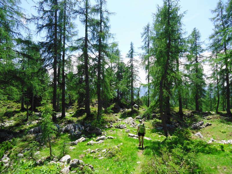 Foto: Günter Siegl / Wander Tour / Zinkenkogel-Runde / 05.07.2014 15:32:04