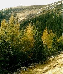 Foto: Wolfgang Dröthandl / Wander Tour / Fußwallfahrt nach Maria Schnee / Abstieg zur Ramplerhütte, Blick zurück auf das Kirchlein / 28.03.2011 16:45:01