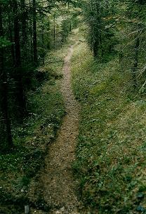Foto: Wolfgang Dröthandl / Wandertour / Aus dem Mendlingtal auf den Gamsstein / Abstieg - Hohlweg im Wald zurück in den Sandgraben / 28.03.2011 16:28:48