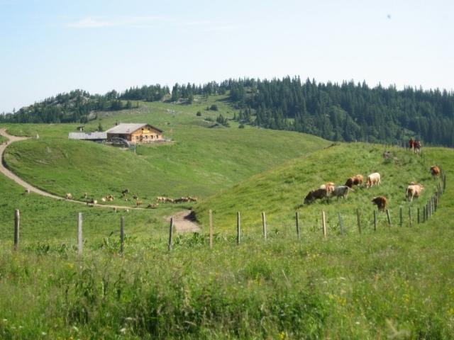 Foto: bestfriend / Wander Tour / Über den Fadensteig zum Klosterwappen (Rundwanderung) / Blick Richtung Almreserlhaus / 21.07.2008 16:30:49