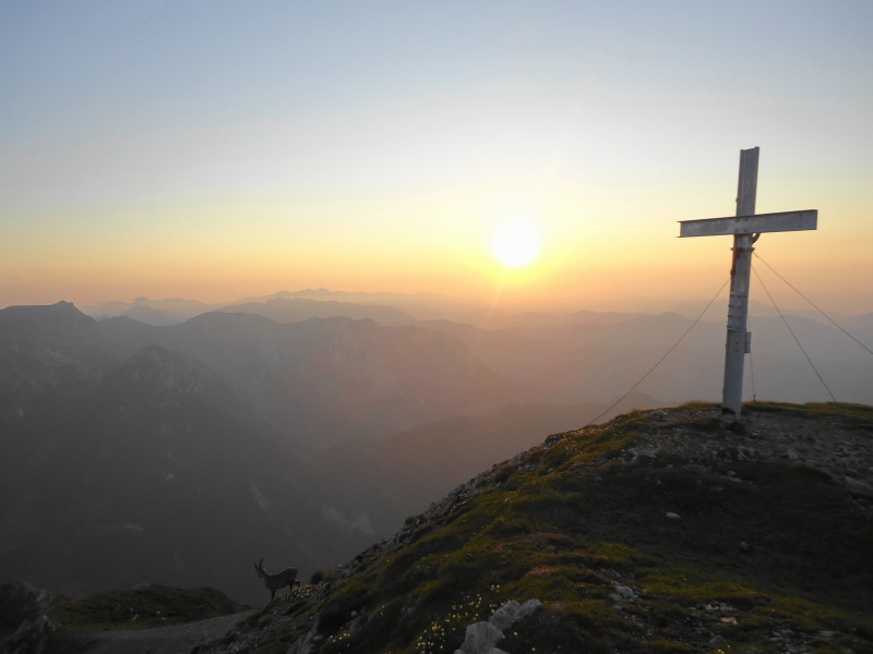 Foto: Günter Siegl / Wander Tour / Gößeck - Vorposten der Eisenerzer Alpen (2214m) / Gößeck! / 28.07.2014 16:43:54