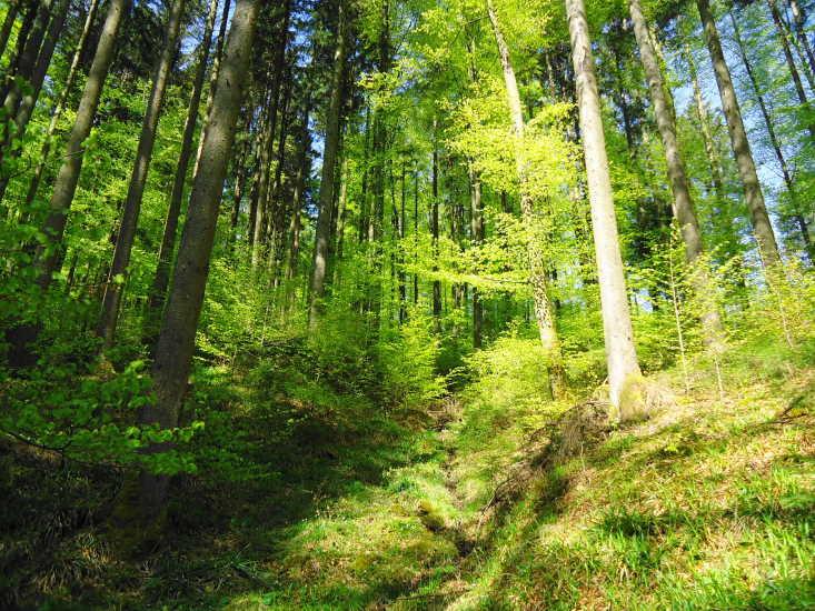 Foto: Günter Siegl / Wander Tour / Von Wessenaurach auf den Richtberg / 28.04.2015 16:14:41