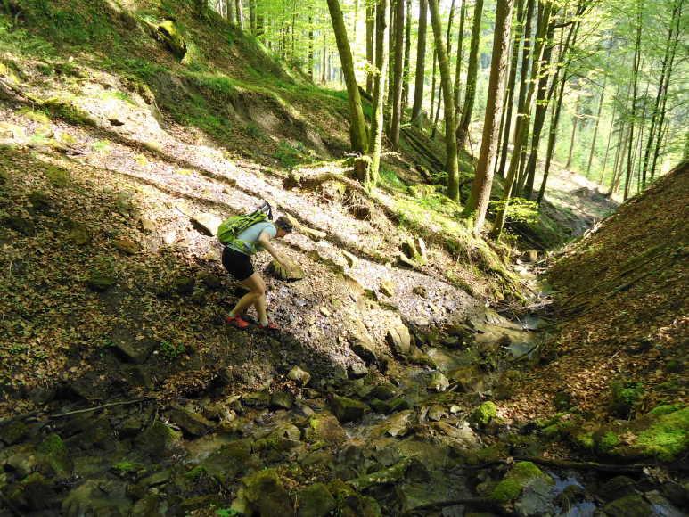 Foto: Günter Siegl / Wander Tour / Von Wessenaurach auf den Richtberg / Den in den Karten eingezeichneten Weg gibt es nicht mehr, es sind nur mehr rudimentäre Spuren vorhanden. / 28.04.2015 16:14:30