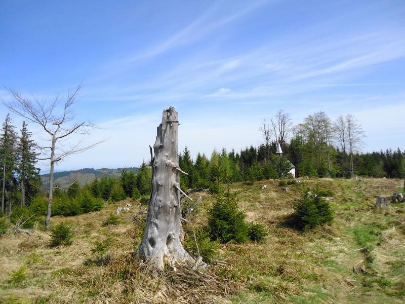 Foto: Günter Siegl / Wander Tour / Von Wessenaurach auf den Richtberg / Der Gipfel des Richtbergs liegt nur unweit der Kirche / 28.04.2015 16:10:12