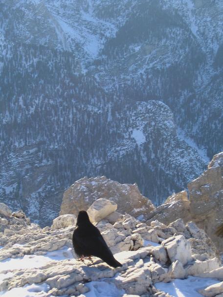 Foto: Andreas Koller / Wander Tour / Dürrenstein - inmitten der Pragser Dolomiten (2839m) / 24.12.2008 13:51:37